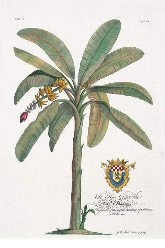 Banana Tree-Porter Design-Stretched Canvas Print