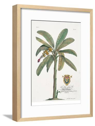 Banana Tree-Porter Design-Framed Art Print