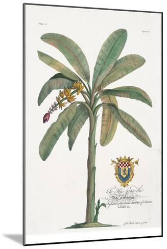 Banana Tree-Porter Design-Mounted Premium Giclee Print