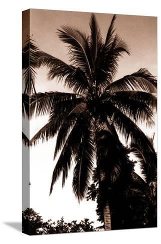 Sepia Palm 4-Porter Design-Stretched Canvas Print