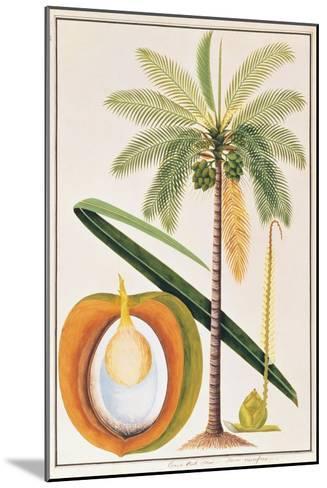 Kelapa or Coconut Palm-Porter Design-Mounted Premium Giclee Print