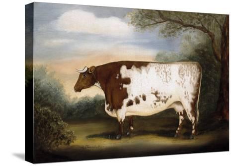 Durham Cow-Porter Design-Stretched Canvas Print