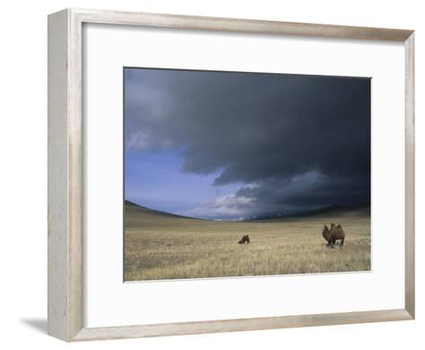 Bactrian Camels in Bayan-Ulgii,Mongolia-David Edwards-Framed Art Print
