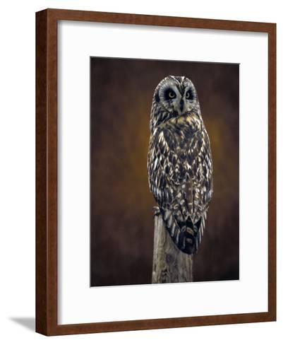 Short Eared Owl, Idaho-Michael S^ Quinton-Framed Art Print