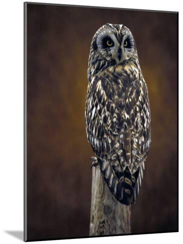 Short Eared Owl, Idaho-Michael S^ Quinton-Mounted Photographic Print