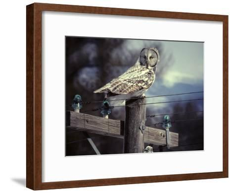 Great Gray Owl on Old Telephone Poles-Michael S^ Quinton-Framed Art Print