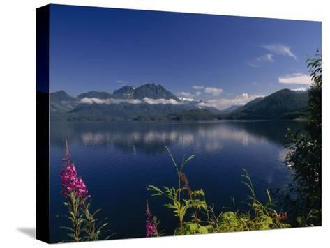 Wildflower in Bloom Along Mountainous Coast of Vancouver Island-Paul Sutherland-Stretched Canvas Print
