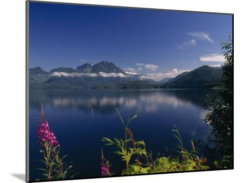 Wildflower in Bloom Along Mountainous Coast of Vancouver Island-Paul Sutherland-Mounted Photographic Print