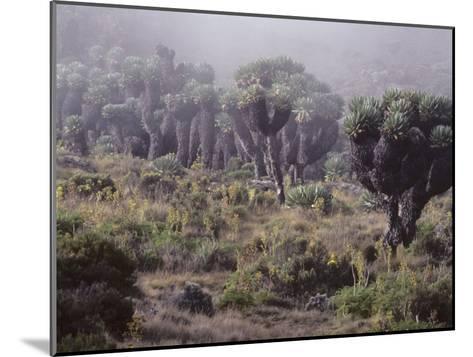 Lalibela Trees on the Slope of Mount Kilimanjaro, East Africa-Skip Brown-Mounted Photographic Print