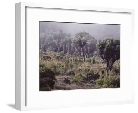 Lalibela Trees on the Slope of Mount Kilimanjaro, East Africa-Skip Brown-Framed Art Print