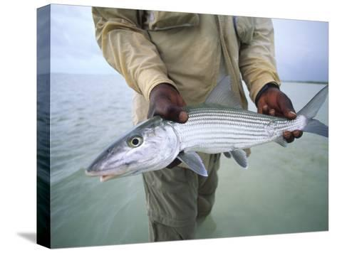 Fisherman Holds Out a Bonefish Off Great Exuma Island-Michael Melford-Stretched Canvas Print
