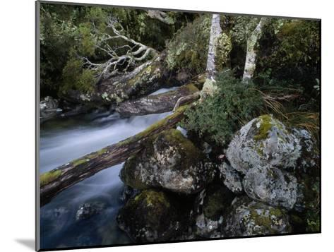 Mountain Stream Flows Through a Rain-Drenched Southern Beech Forest-Gordon Wiltsie-Mounted Photographic Print