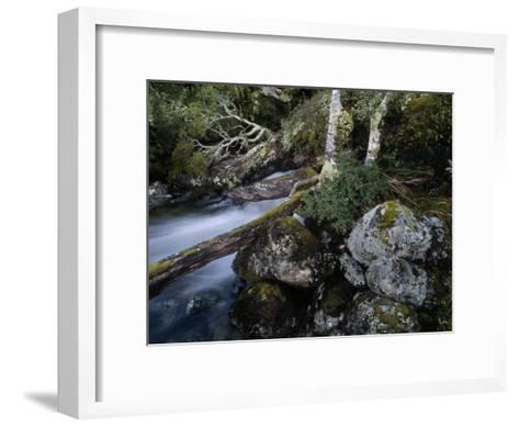 Mountain Stream Flows Through a Rain-Drenched Southern Beech Forest-Gordon Wiltsie-Framed Art Print