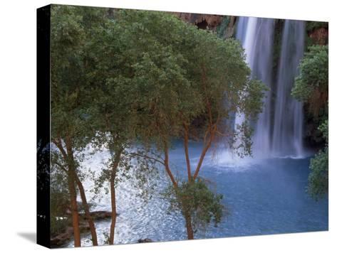 Havasu Falls Behind a Grove of Trees-Bill Hatcher-Stretched Canvas Print