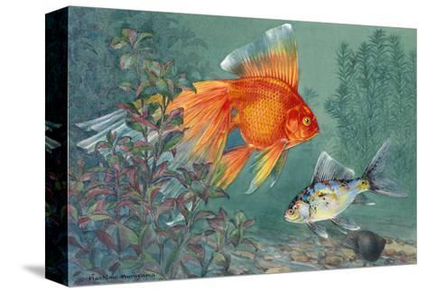 Veiltail and Shubunkin Swim Together Through Ludwigia-Hashime Murayama-Stretched Canvas Print