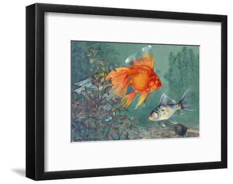 Veiltail and Shubunkin Swim Together Through Ludwigia-Hashime Murayama-Framed Art Print