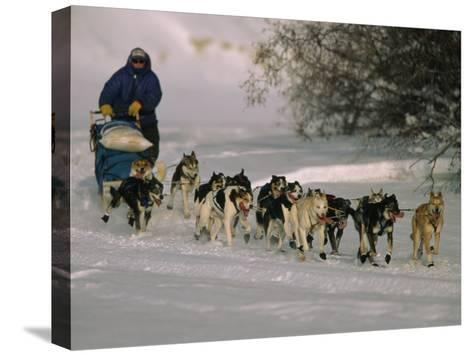 Dogs Pull a Sled across Snow-Nick Norman-Stretched Canvas Print