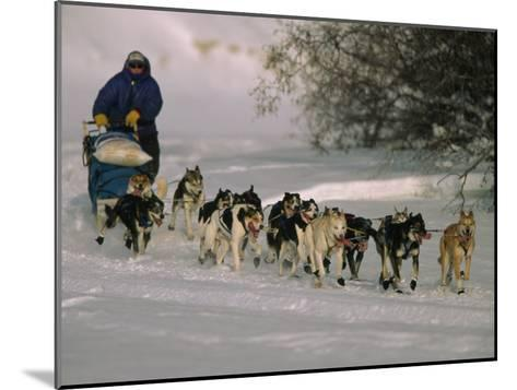 Dogs Pull a Sled across Snow-Nick Norman-Mounted Photographic Print