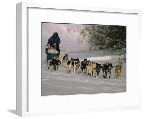 Dogs Pull a Sled across Snow-Nick Norman-Framed Art Print