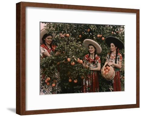 Mexican Women in Native Clothing Pick Oranges-B^ Anthony Stewart-Framed Art Print