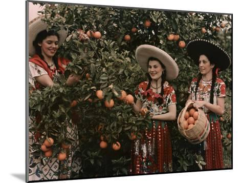 Mexican Women in Native Clothing Pick Oranges-B^ Anthony Stewart-Mounted Photographic Print