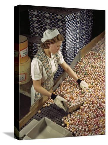 Factory Worker Sorts Through Candy on a Conveyor Belt-Willard Culver-Stretched Canvas Print