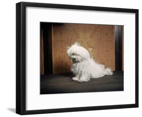 Portrait of a Maltese Dog-Willard Culver-Framed Art Print