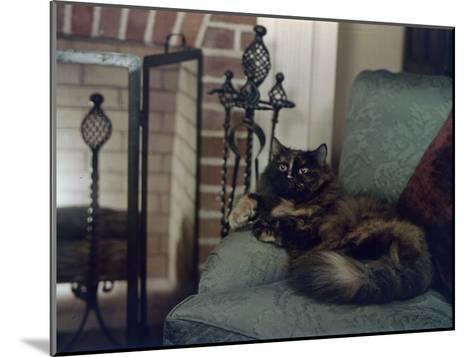 Tortoiseshell Persian Cat Reclines on a Sofa-Willard Culver-Mounted Photographic Print