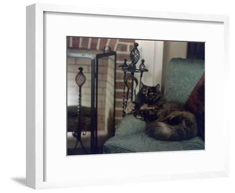 Tortoiseshell Persian Cat Reclines on a Sofa-Willard Culver-Framed Art Print