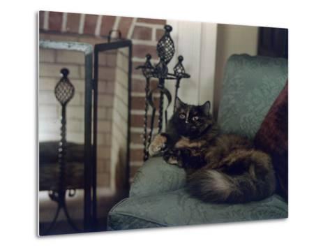 Tortoiseshell Persian Cat Reclines on a Sofa-Willard Culver-Metal Print