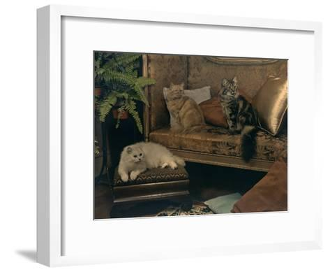 Trio of Persian Cats Recline on the Furniture-Willard Culver-Framed Art Print