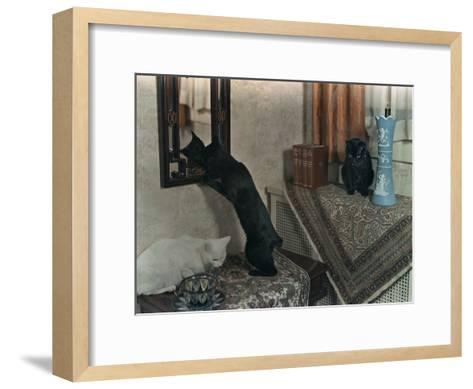 Trio of Tailless Manx Cats Play on House Furniture-Willard Culver-Framed Art Print