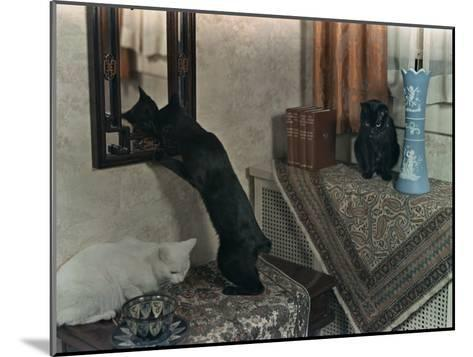 Trio of Tailless Manx Cats Play on House Furniture-Willard Culver-Mounted Photographic Print