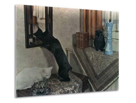 Trio of Tailless Manx Cats Play on House Furniture-Willard Culver-Metal Print