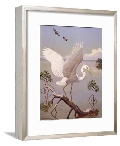 Great White Heron, White Morph of Great Blue Heron, Spreads its Wings-Walter Weber-Framed Art Print