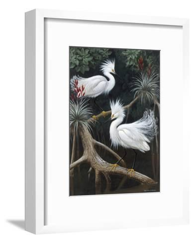 Snowy Egrets Display their Courtship Plumage in a Mangrove Swamp-Walter Weber-Framed Art Print