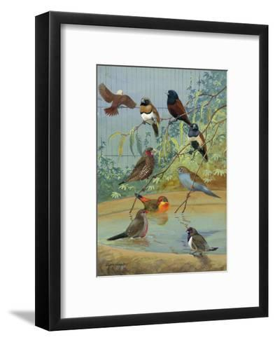 Various Birds Rest in a Birdbath and on Branches That Hang Above-Allan Brooks-Framed Art Print