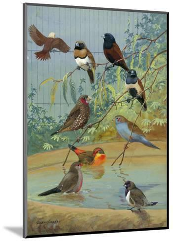 Various Birds Rest in a Birdbath and on Branches That Hang Above-Allan Brooks-Mounted Photographic Print