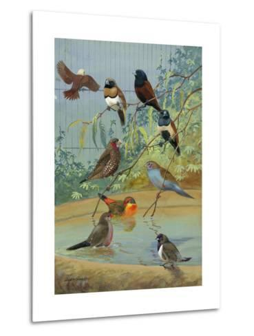 Various Birds Rest in a Birdbath and on Branches That Hang Above-Allan Brooks-Metal Print
