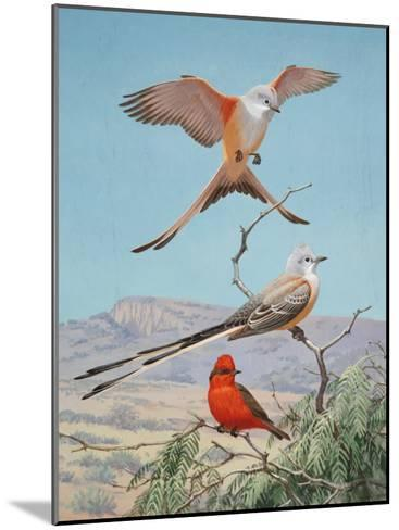Scissor-Tailed and Vermilion Flycatchers Perch on a Mesquite Tree-Walter Weber-Mounted Photographic Print
