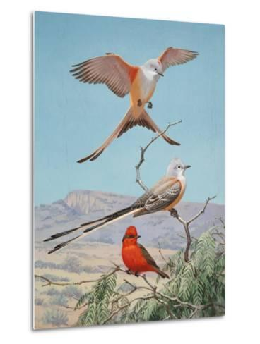 Scissor-Tailed and Vermilion Flycatchers Perch on a Mesquite Tree-Walter Weber-Metal Print