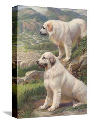 Two Great Pyrenees Dogs Guard a Flock of Sheep--Stretched Canvas Print