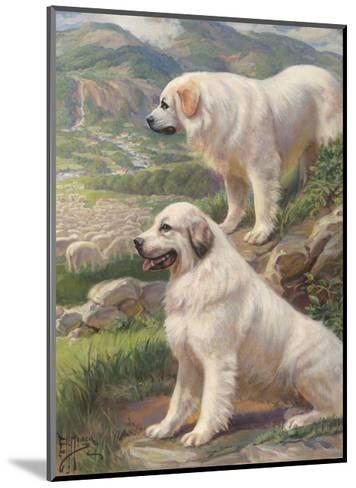 Two Great Pyrenees Dogs Guard a Flock of Sheep--Mounted Photographic Print