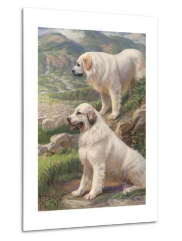 Two Great Pyrenees Dogs Guard a Flock of Sheep--Metal Print