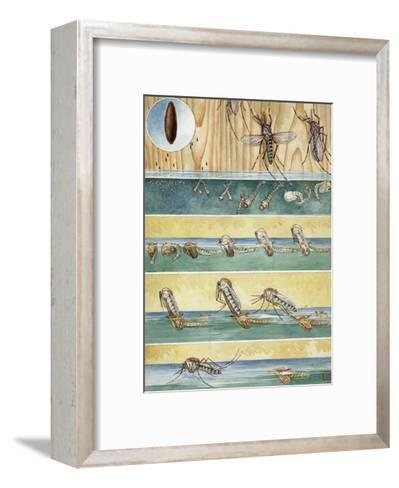 Life Cycle of Aedes Aegypti, the Mosquito That Carries Yellow Fever-Hashime Murayama-Framed Art Print
