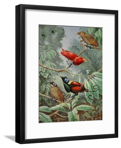 Two King Birds of Paradise Perch Above Two Wilson's Birds of Paradise-Walter Weber-Framed Art Print