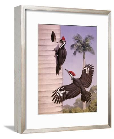 Pair of Pileated Woodpeckers Nest in a Dead Royal Palm Tree-Walter Weber-Framed Art Print