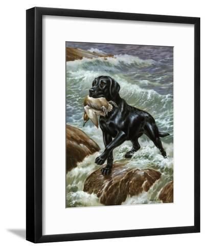 Labrador Retriever Climbs from Surf with Dead Duck in its Jaws-Walter Weber-Framed Art Print