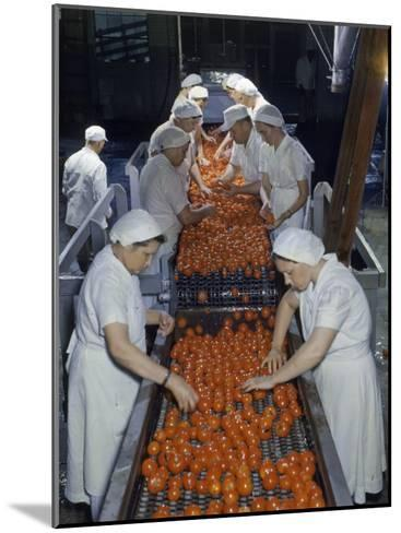 Tomato Factory Workers Remove Bruised Fruit from a Conveyor Belt-Joseph Baylor Roberts-Mounted Photographic Print