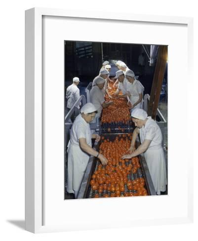 Tomato Factory Workers Remove Bruised Fruit from a Conveyor Belt-Joseph Baylor Roberts-Framed Art Print
